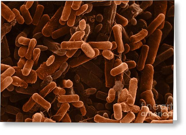 Scanning Electron Micrograph Greeting Cards - Pseudomonas Greeting Card by David M. Phillips