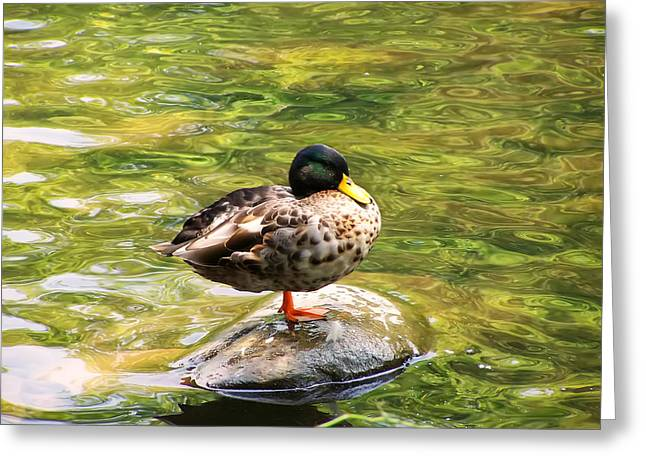 Bird Pictures Greeting Cards - Psychedelic Duck  Greeting Card by Chris Flees