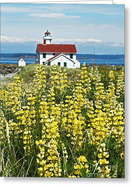 Townsends Inlet Greeting Cards - Pt. Wilson Light and Lupines Thirty Three Greeting Card by Donald Sewell