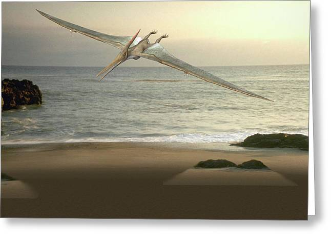 Pteranodon Pterosaur Greeting Card by Friedrich Saurer