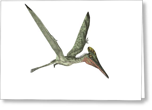 Pterodactyl Pterosaur Greeting Card by Friedrich Saurer