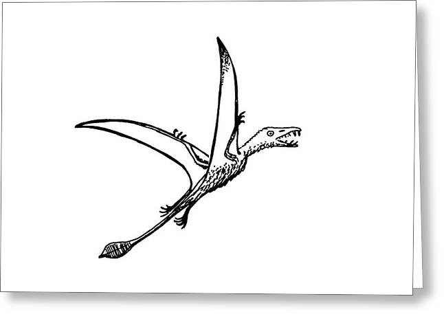 Pterosaur Eudimophodon Greeting Card by Richard Bizley