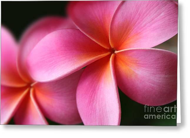 Tropical Flowers Of Hawaii Greeting Cards - Pua Lei Aloha Cherished Blossom Pink Tropical Plumeria Hina Ma Lai Lena O Hawaii Greeting Card by Sharon Mau