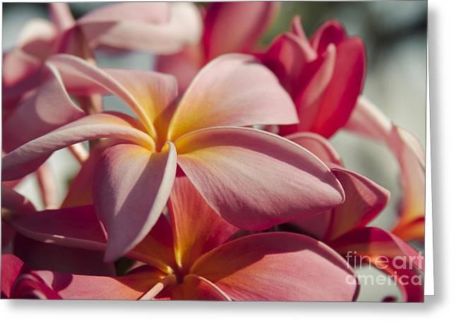 Pua Melia Ke Aloha Maui Hikina Greeting Card by Sharon Mau