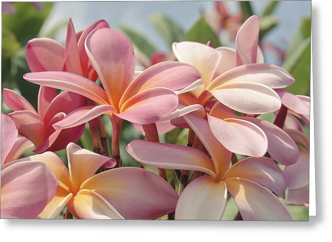 Square Format Greeting Cards - Pua Melia ke Aloha Maui Greeting Card by Sharon Mau