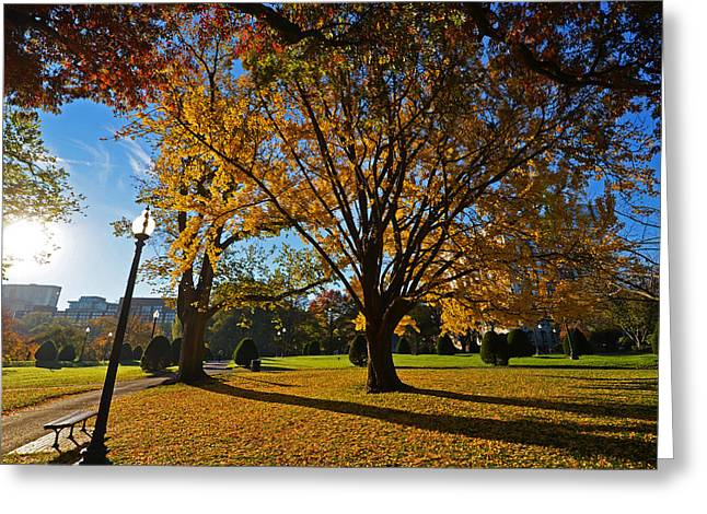 Boston Ma Greeting Cards - Public Garden Fall Tree Greeting Card by Toby McGuire
