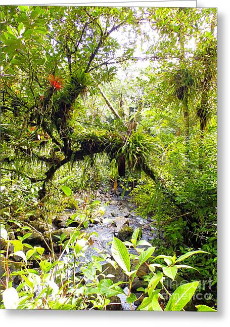 Fall Trees Greeting Cards - Puerto Rican Rainforest with Creek 2 Greeting Card by Glen Laughton