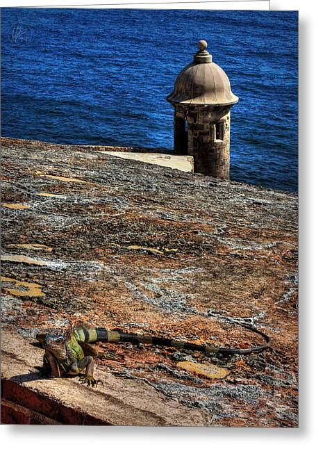 Castillo San Felipe Greeting Cards - Puerto Rico Iguana 004 Greeting Card by Lance Vaughn