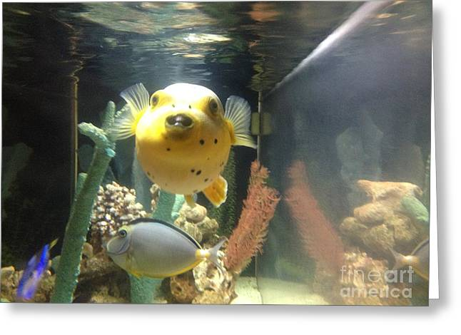Puffer Greeting Cards - Puffer Fish  Greeting Card by Beth Williams