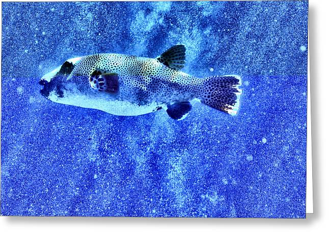 Undersea Photography Digital Art Greeting Cards - Puffer Fish 2 Greeting Card by Roy Pedersen