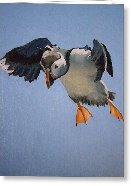 Occupy Beijing Greeting Cards - Puffin Landing Greeting Card by Eric Burgess-Ray