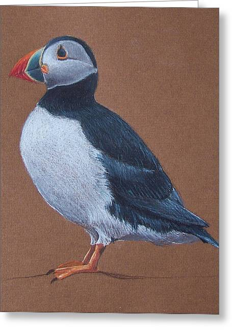 Sized Drawings Greeting Cards - Puffin Greeting Card by Liam Harper