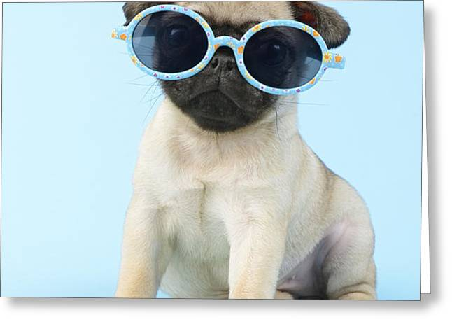 Pug Cool Greeting Card by Greg Cuddiford