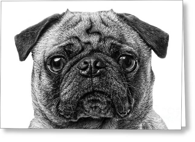 Friendly Greeting Cards - Pug Dog black and white Greeting Card by Edward Fielding