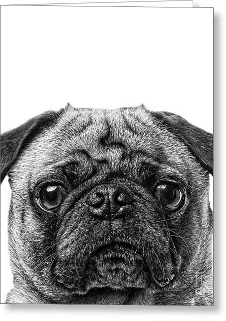 Graphic Photographs Greeting Cards - Pug Dog Square Format Greeting Card by Edward Fielding