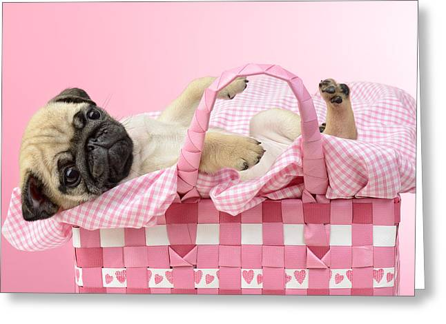Puppies Photographs Greeting Cards - Pug In A Basket Greeting Card by Greg Cuddiford