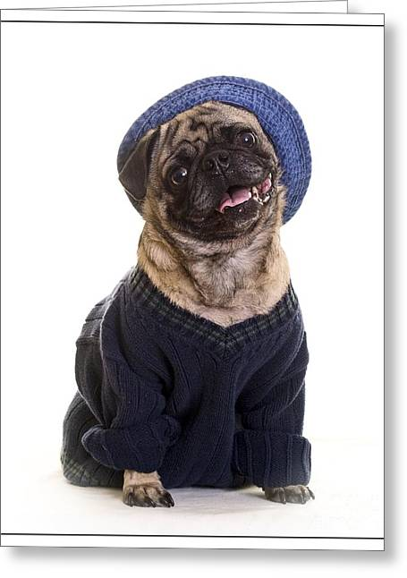 Dogs. Pugs Greeting Cards - Pug in sweater and hat Greeting Card by Edward Fielding
