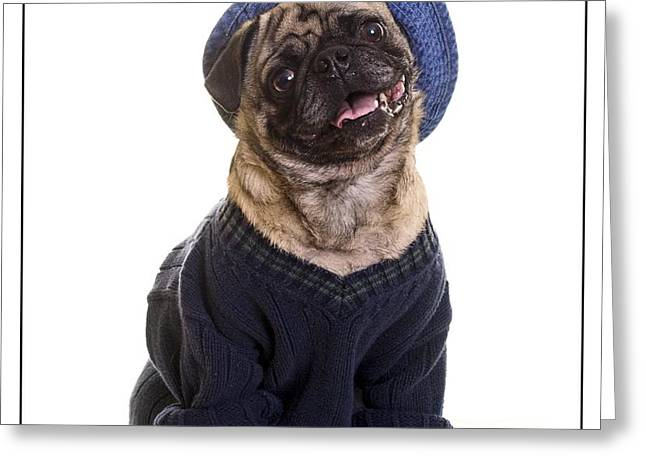 Pug in sweater and hat Greeting Card by Edward Fielding