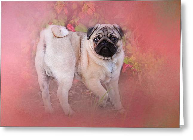 Artistic Photography Greeting Cards - Pug In The Garden Greeting Card by Jai Johnson