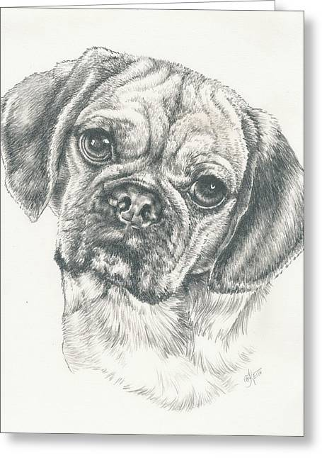 Toy Dog Drawings Greeting Cards - Puggle Again Greeting Card by Barbara Keith