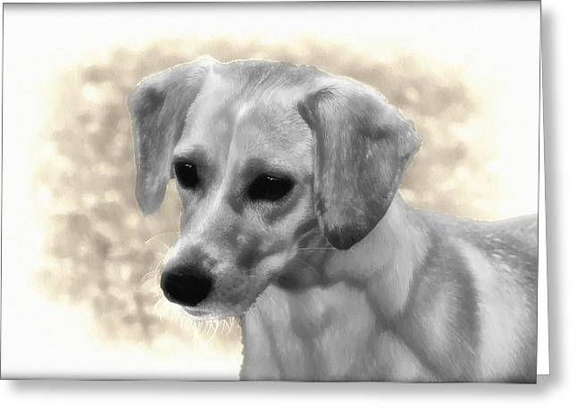 Puggle Greeting Cards - Puggles Greeting Card by Bill Cannon