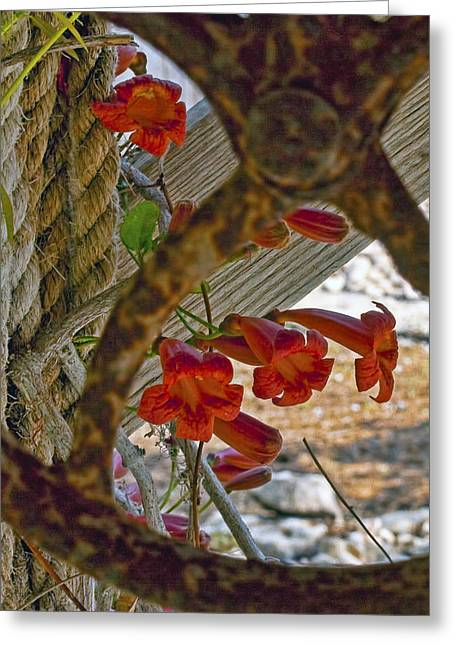 Texas Greeting Cards - Pulley Wood and Vine Greeting Card by Gary Holmes