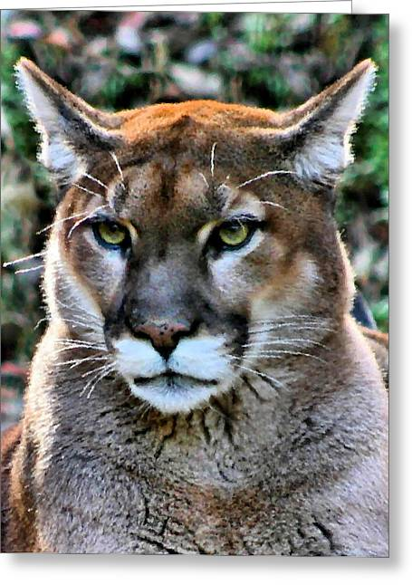 Large Cats Greeting Cards - Puma Greeting Card by Kristin Elmquist