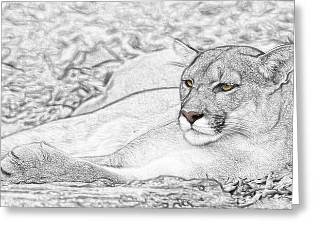 Sized Pyrography Greeting Cards - Puma  Greeting Card by Paul Pascal