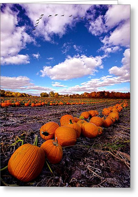 Patch Greeting Cards - Pumkin Daze Greeting Card by Phil Koch