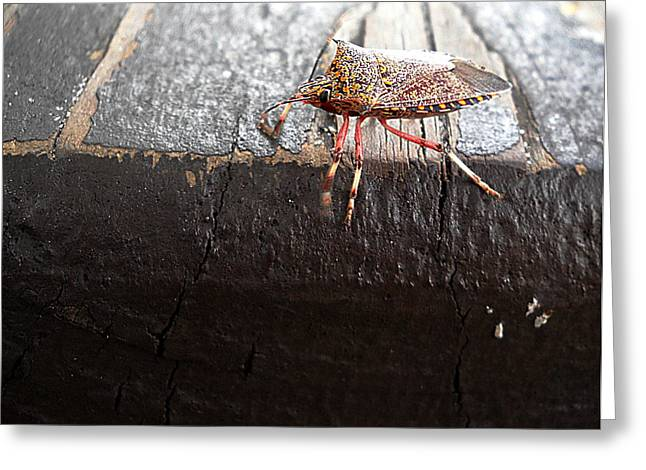 Pumpkin On A Bench Greeting Cards - Pumpkin Bug  000 Greeting Card by Chris Mercer