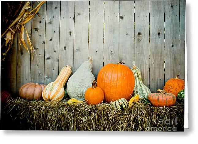 Dallas Arboretum Greeting Cards - Pumpkin Fence Greeting Card by Sonja Quintero