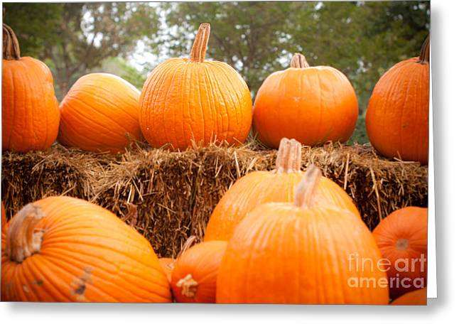 Harvest Time Greeting Cards - Pumpkin Fest Greeting Card by Sonja Quintero