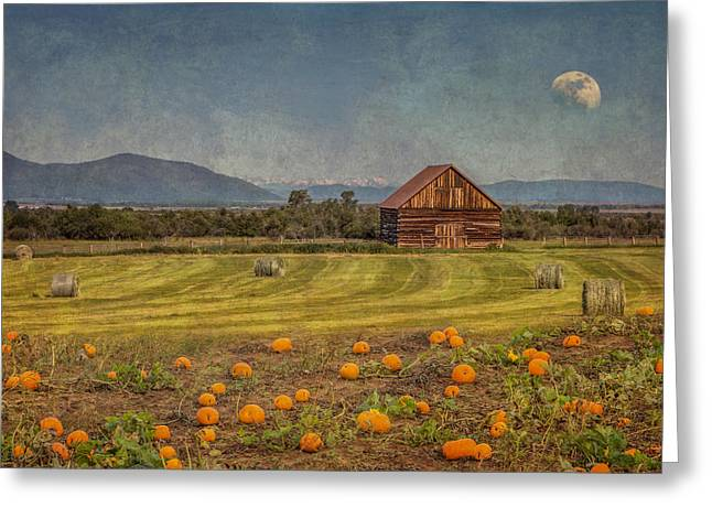 Shed Greeting Cards - Pumpkin Field Moon Shack Greeting Card by Patti Deters