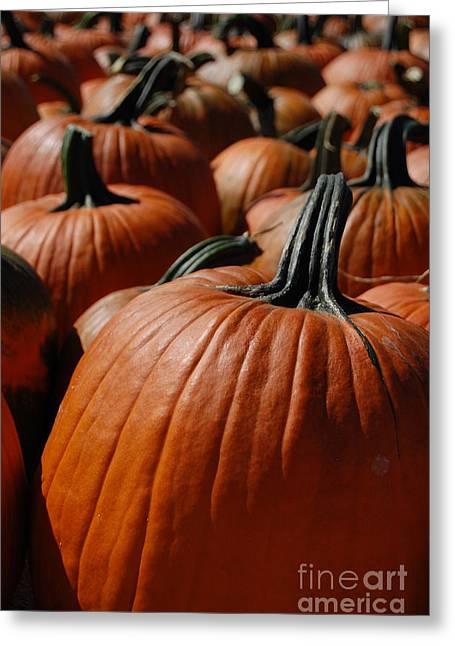 Samhaim Greeting Cards - Pumpkin Harvest 1 Greeting Card by First Star Art