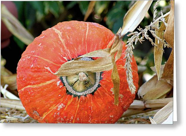 Harvest Bounty Greeting Cards - Pumpkin Harvest Greeting Card by Art Block Collections