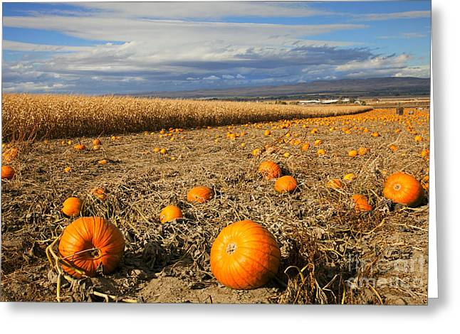 Cornfields Greeting Cards - Pumpkin Harvest Greeting Card by Mike  Dawson