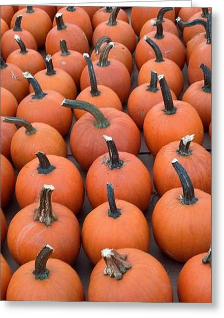 Maine Farms Greeting Cards - Pumpkin Parade Greeting Card by Timothy Curtin
