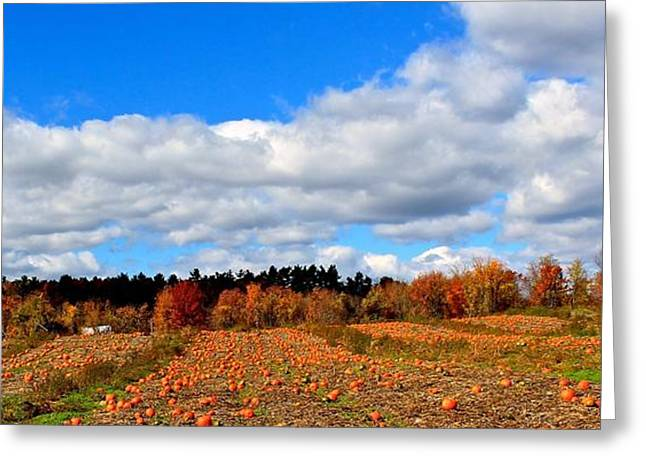 Central Ma Greeting Cards - Pumpkin Patch at Rota Springs 3 Greeting Card by Michael Saunders