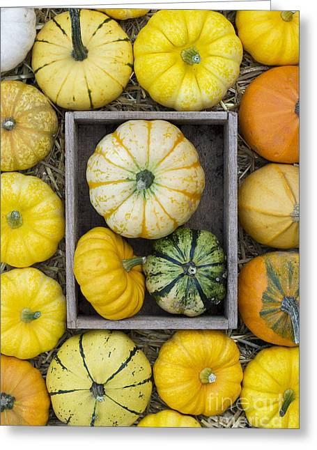 Pumpkins Greeting Cards - Pumpkin pattern Greeting Card by Tim Gainey