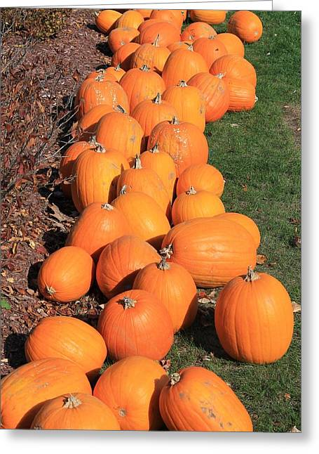 Central Ma Greeting Cards - Pumpkin Row at Meadowbrook Greeting Card by Michael Saunders