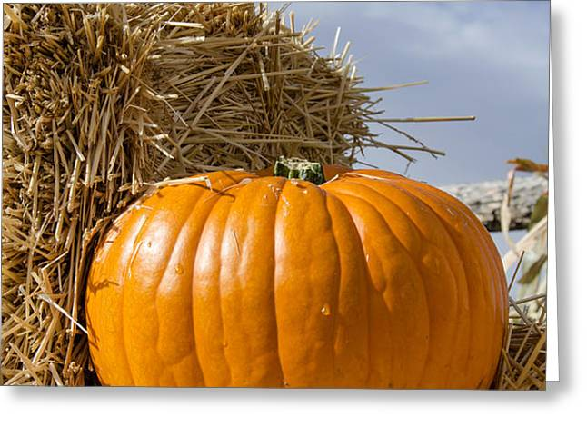 Pumpkin Greeting Card by Yoshiko Wootten