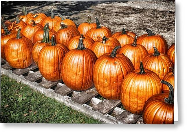 Fresh Produce Mixed Media Greeting Cards - Pumpkins 2 Greeting Card by Todd and candice Dailey