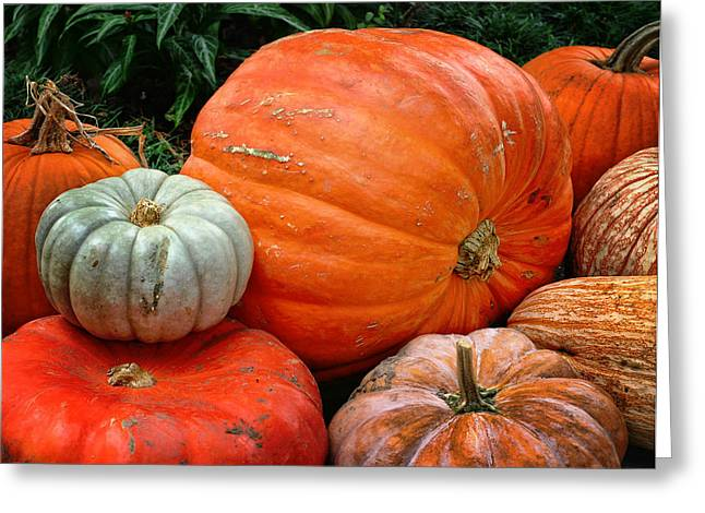 Fall Fruit Greeting Cards - Pumpkins and More Greeting Card by David and Carol Kelly