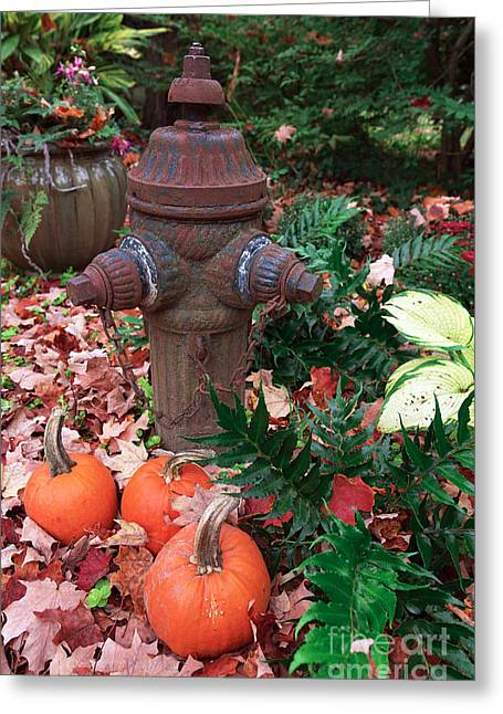 Fallen Leaf Greeting Cards - Pumpkins by the Hydrant Greeting Card by John Rizzuto