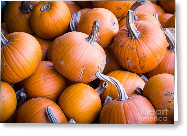 Orange Pumpkins Greeting Cards - Pumpkins Greeting Card by Edward Fielding