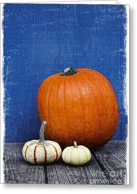 Harvest Art Greeting Cards - Pumpkins Greeting Card by Elena Nosyreva