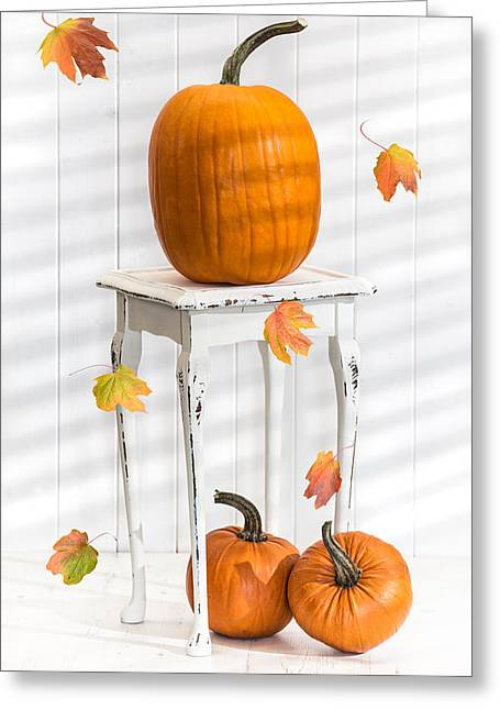 White Pumpkin Greeting Cards - Pumpkins For Thanksgiving Greeting Card by Amanda And Christopher Elwell