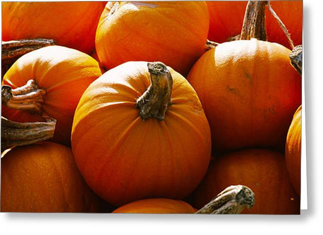 Vegetable Garden Greeting Cards - Pumpkins, Half Moon Bay, California, Usa Greeting Card by Panoramic Images