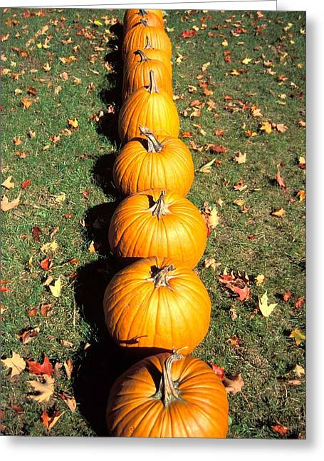 Orange Pumpkin Greeting Cards - Pumpkins In A Row Greeting Card by Anonymous