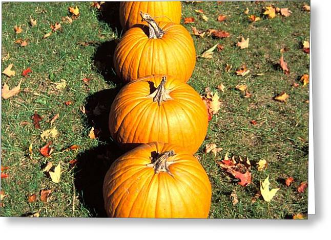 Pumpkins In A Row Greeting Card by Anonymous